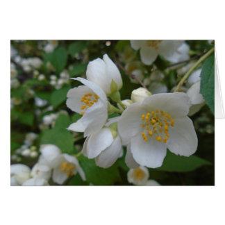 Carte fleurs blanches