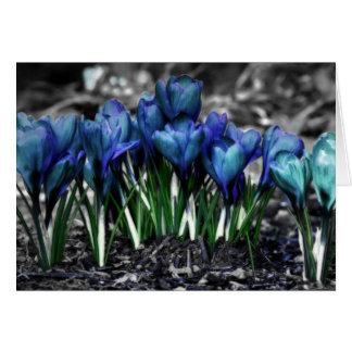 Carte Fleurs bleues de crocus d'Aqua