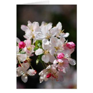 Carte Fleurs de cerisier et signification