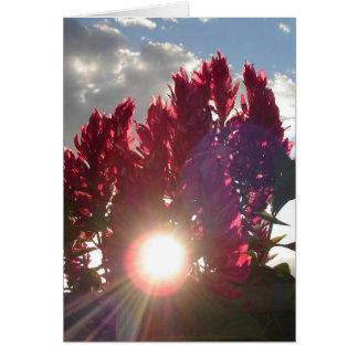 Carte Fleurs de flamme de coucher du soleil - verticale