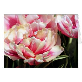 Carte fleurs de floraison