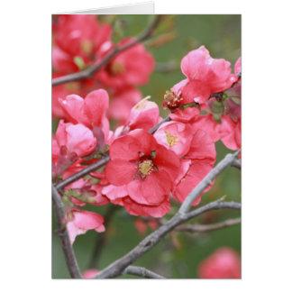 Carte Fleurs de pomme sauvage