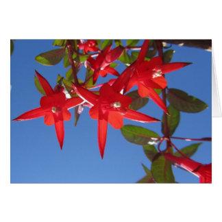 Carte Fleurs fuchsia rouges