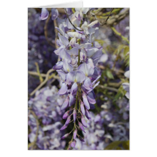 Carte Fleurs - glycines