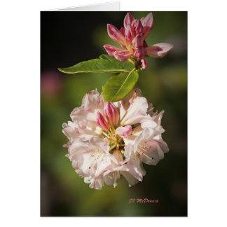 Carte Fleurs paisibles