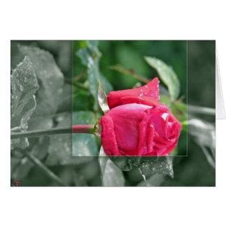 Carte Fleurs par le lac - bourgeon de rose rouge