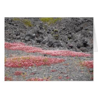 Carte Fleurs sauvages dans le domaine de lave, Hawaï