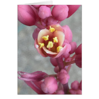 Carte Floral rose