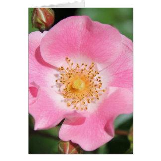 Carte florale rose - masquez à l'intérieur