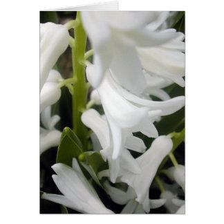 Carte flore pour le ressort #1