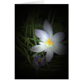 Carte flore pour le ressort #4