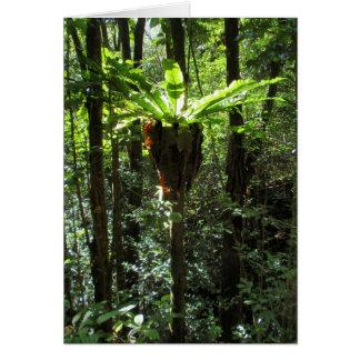 Carte Fougère hawaïenne sauvage de nid d'oiseau
