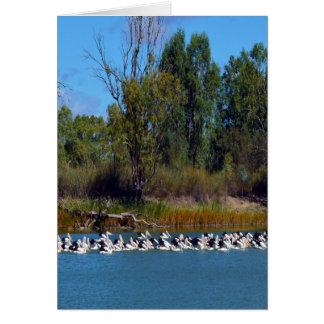 Carte Frénésie de pêche de pélican, rivière Murray,