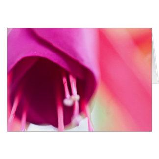 Carte Fuchsia