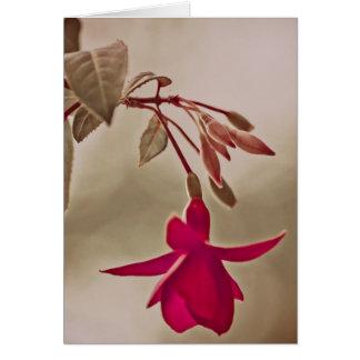 Carte Fuchsia de fleur dans le rose