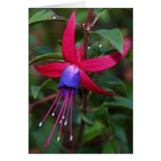 Carte fuchsia de fleur et de faits