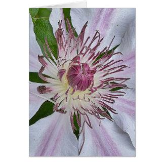 Carte Fuchsia mou