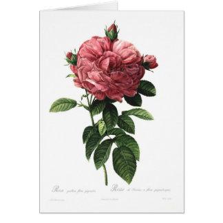 Carte Giganteo de flore de gallica de Rosa