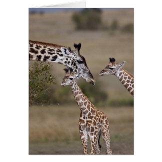 Carte Girafe de Maasai (girafe Tippelskirchi) comme vu