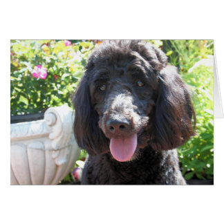 Carte GoldenDoodle Abby 1