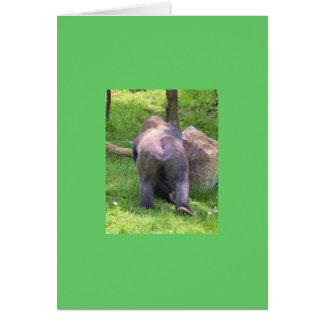 Carte Gorille #2