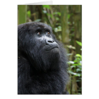 Carte Gorille mes rêves - femelle