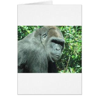 Carte Gorille principal et d'épaule