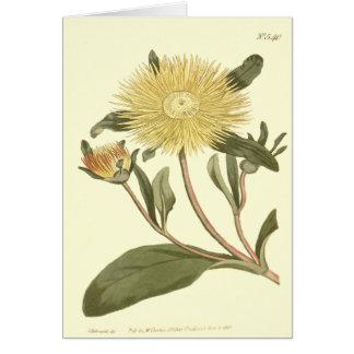 Carte Grande illustration jaune de souci de figue
