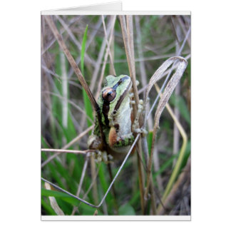 Carte Grenouille Pacifique de Treefrog ou de choeur