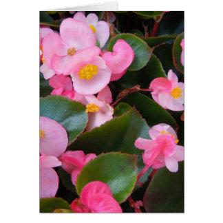 Carte Groupes de nuances variables des bégonias roses