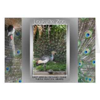 CARTE GRUE ANIMALE DE LIGNE DE ZOO DE LOUISVILLE, PAON