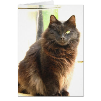 Carte Halloween-Un a observé le chat noir