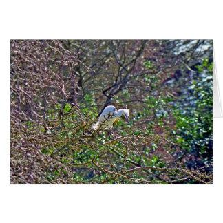 Carte Héron de grand bleu - le blanc morph