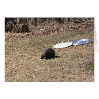 Carte Heure du déjeuner de Groundhog