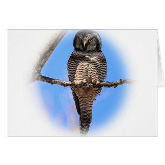 Carte Hibou de faucon du nord 4A