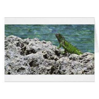 Carte Iguane vert d'îles de Grand Cayman