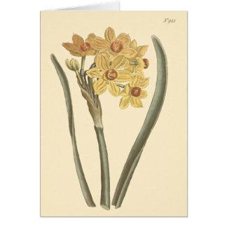 Carte Illustration botanique de narcisse de primevère