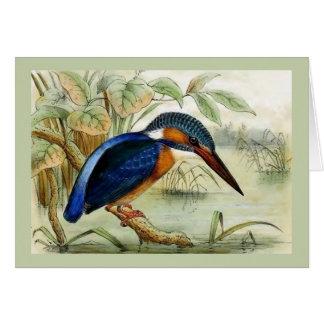 Carte Illustration vintage d'oiseau de martin-pêcheur
