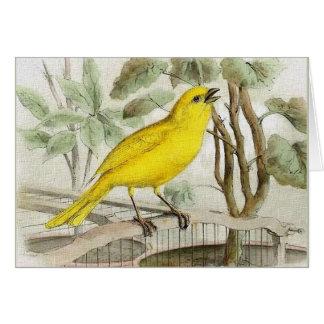 Carte Illustration vintage jaune canari