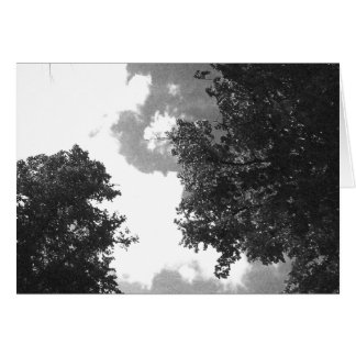 Carte Image noire et blanche grenue des arbres et du