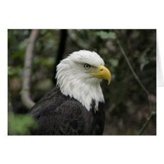 Carte IMG_0673-eagle_5x7