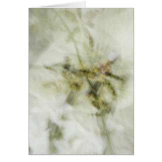 Carte impression_of_orchids