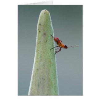 Carte Insecte Nyph de Milkweed