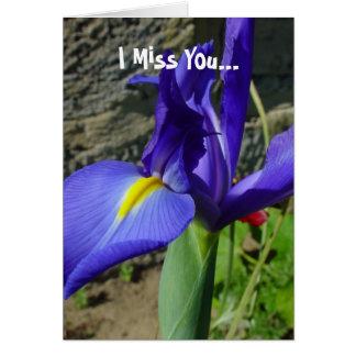 Carte Iris pourpre