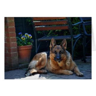 Carte jardin, berger allemand, chien