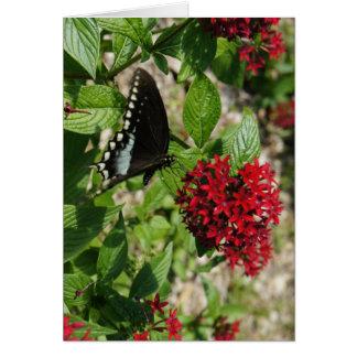 Carte Jardin de papillon
