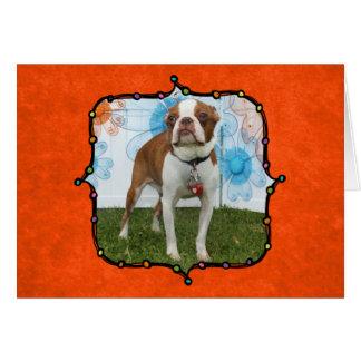 Carte Jasmin - Boston Terrier