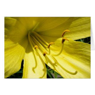 Carte jaune de Daylily