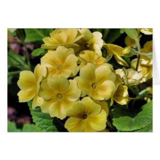 Carte jaune de photographie de fleur de primevère