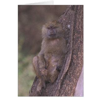 Carte Jeune babouin